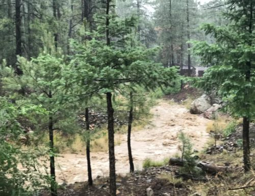 Inadequate Monsoon Moisture Causes Prescott NF to Reinstate Stage I Fire Restrictions